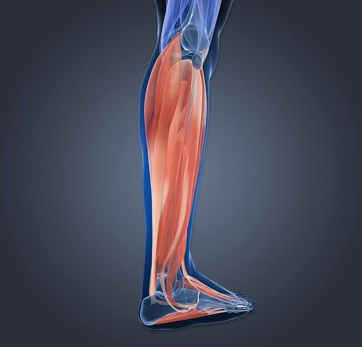 Image of leg muscle fatigue